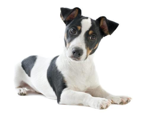 Prótesis para perros con impresoras 3D: cómo puedes ayudar a tu mascota