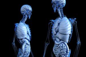 corazón humano impreso en 3D